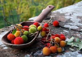 Fall Fruit